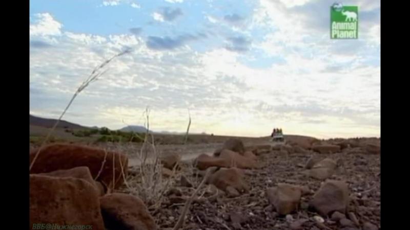 BBC «Заповедник в дебрях Африки» (12 серия) (Реальное ТВ, животные, 2005)