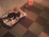 Котята Дочка и Тиша, 2 месяца, отдам в добрые руки!