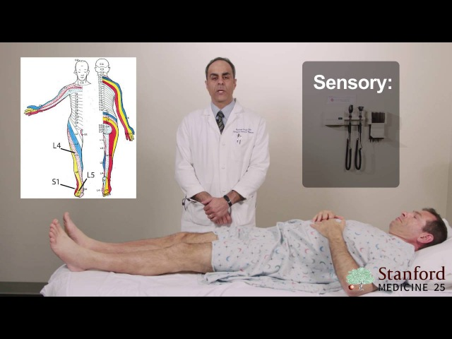 Approach to Low Back Pain Physical Exam - Stanford Medicine 25