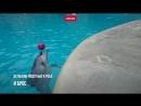 Дельфин Джим играет в мяч