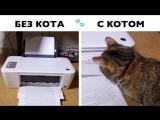 Жизнь с котом и без кота