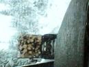 Вывозка леса зимой