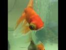 Рыба мутант