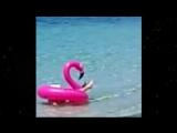 Бабка в море