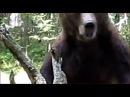 Выживание в лесу Медведь Охота на человека Охота Рыбалка в поход Тайга ночевка лес медведь людоед