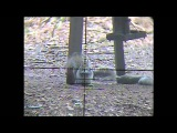 squirrel shooting with a snipercam (bonus rabbit for pot too) ;-)