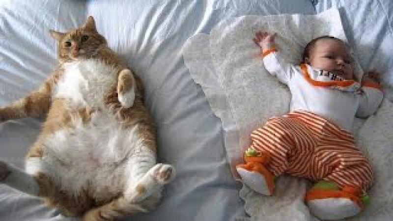 Веселая песенка для малышей: Настоящий друг: Малыши и четвероногие друзья - обнимашки