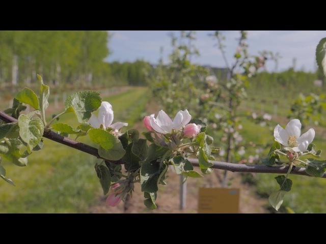 Весна в ЭкоТехноПарке SkyWay Промо код: MAY-SWIG-10052017 100 акций в подарок.Регистрация: swigroup.org/212j