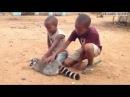 Лемур просит детей погладить его Lemur asks children to pet him