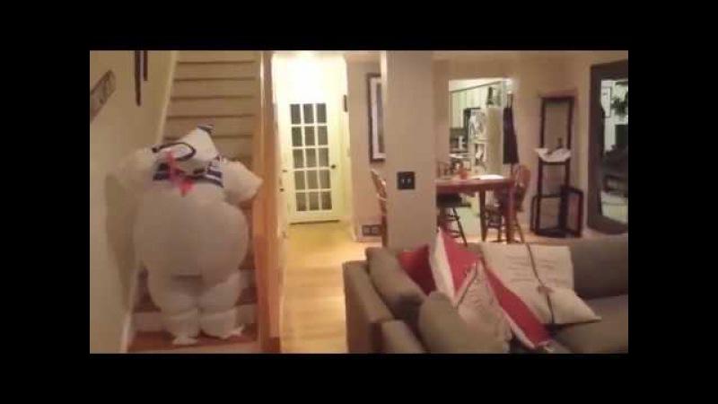 Собака точка ком(Dog meme2)