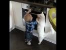 кошка защитница