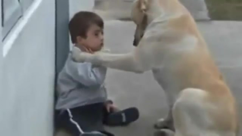 Little Boy w Downs Syndrome His Dog - Unconditional Love of Mans Best Friend