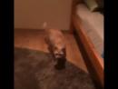 Бешеный кот часть 2