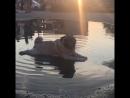 юный купальщик Боня