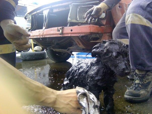 Мурманские cотрудники экстренных служб вытянули щенка, упавшего вяму сотходами нефтепродуктов