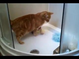 Рыжий кот обожает принимать душ