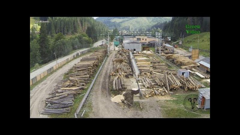 Кто уничтожает леса Украины Green Video