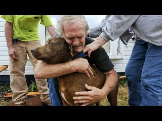 Dogs Meet Their Owner After A Long Time 🐶💕 [Funny Pets]