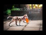 Lumos Solem Gogol 2-2.5 month