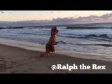 T-REX BEACH DAY!
