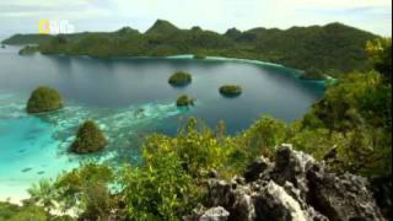 Дикая природа Индонезии Затерянные миры Папуа