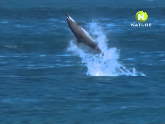 Кружащиеся дельфины