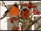 Кенни Джи-Песня птиц