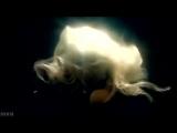 Infernal - Self Control (TOTAL CONTROL MIX) VIDEO CLIP (ITALO DISCO)