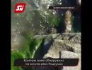На Ставрополье испугались огромной змеи