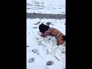 Жора помогает лепить снежную бабу
