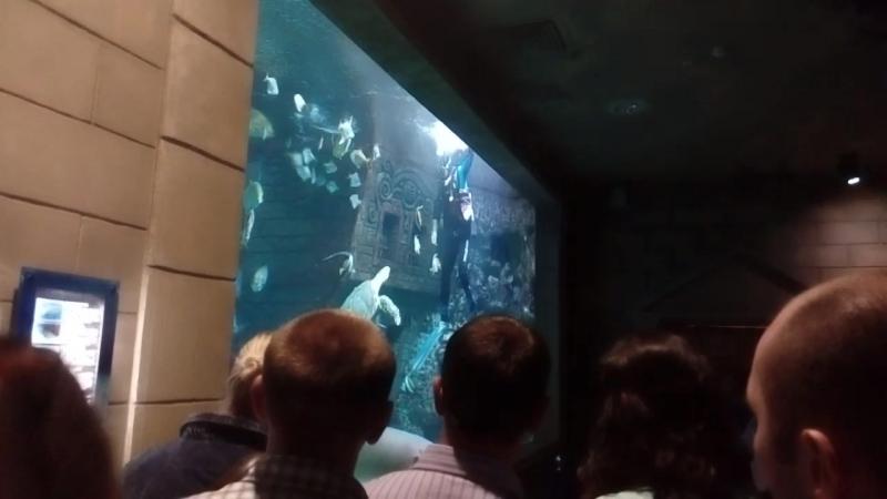 шоу акул