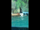 Москвадан келген ак 🐳 кит