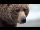 BBC Великие природные явления 2 Серия Великий Исход Лосося The Great Salmon Run 2009
