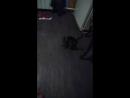 Снимаю с моим котёнком  Снимаю видео с моим котёнком васей
