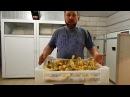 Инкубация гусиного яйца 3 серия