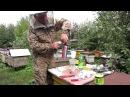 Обработка от клеща Варроа дым пушкой. The treatment against varroa mite smoke gun.