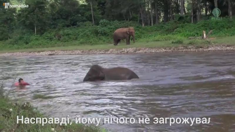 Стурбоване слоненя стрибнуло в річку щоб врятувати друга