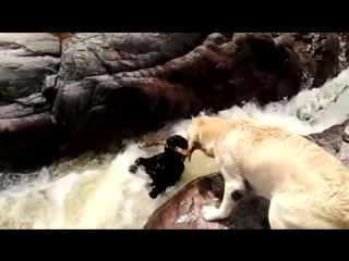Собака спасла другую собаку