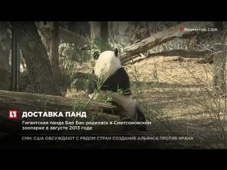 Панда Бао Бао из Смитовского зоопарка Вашингтона готовится к переезду в Китай
