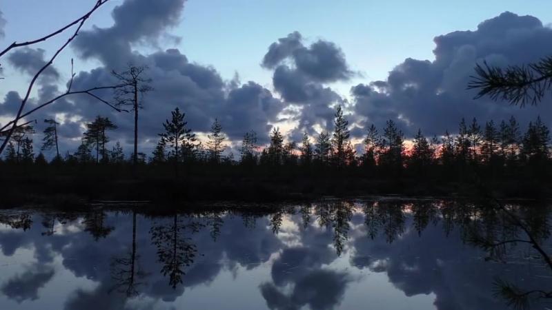 Северодвинское болото на закате в мае ⚡ TELEBELOMOR.RU