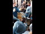 Операция по спасению тигра в Приморском крае