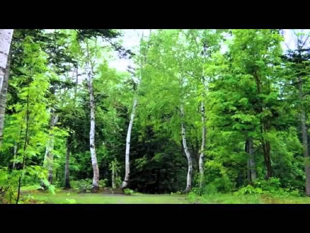 Настоящие Звуки природы Живой лес Пение птиц
