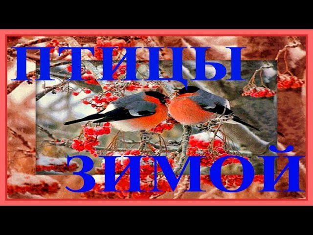 1 Hr - Метель и Поющие Синички / Singing Titmouse in Winter