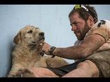 Спортсмены просто накормили бездомную собаку и не подозревали, к чему это приве ...