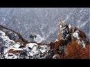 169 Отшельники в Китае Буддисты - YouTube