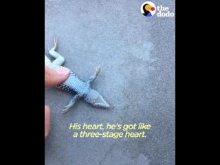Девушка спасла ящерицу упавшую в бассейн