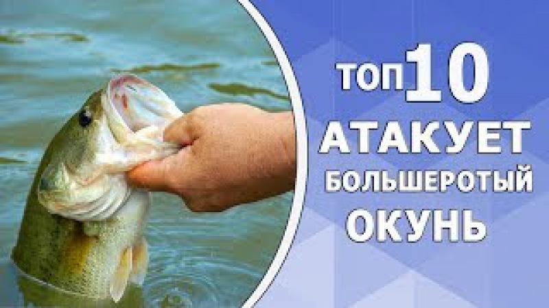 Рыбалка. 10 Aтак большеротого окуня