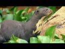 Wildest Latin America ' Pantanal Brazil's Wild Heart В дебрях Латинской Америки ' Пантанал Дикое сердце Бразилии