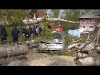 ЧП в Асбесте по адресу: Московская, 11. Дерево раздавило авто.