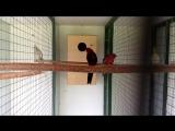 Мой вольер для попугаев...)))